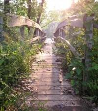 Adrenalin és kikapcsolódás: a kalandparkok sajátossága
