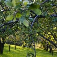 Kert kiépítése kertészkedés és pihenés céljából